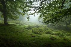 El LIFE+ Urogallo en Cantabria