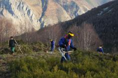 Resultados del proyecto de custodia de la Fundacion Oso Pardo en la Reserva de Biosfera de Muniellos