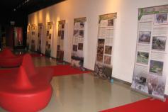 Exposición sobre el urogallo cantábrico en la localidad asturiana de Muros de Nalón