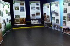 exposición del urogallo cantábrico en Navelgas, en Tineo (Asturias)