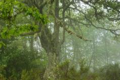 El LIFE+ Urogallo cantábrico promueve un nuevo proyecto de custodia del territorio en las Reservas de Biosfera de Redes y Muniellos