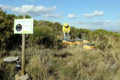 Instalación de colmenas para facilitar la polinización del arándano/ Tierra Ibérica