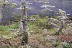 Parque de presuelta @ Servicio territorial de Medio Ambiente de León