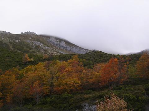 Cantadero camaleno