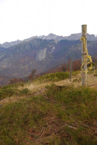 SEO/BirdLife concluye otra temporada de trabajos a favor del urogallo cantábrico en el PN de Picos de Europa