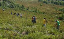 Voluntarios señalizan vallados peligrosos para el urogallo cantábrico